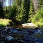 Šumavský lesní potok